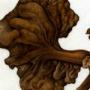 Eriosoma lanuginosum