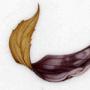 Forsythia sp. and Ulmus minor
